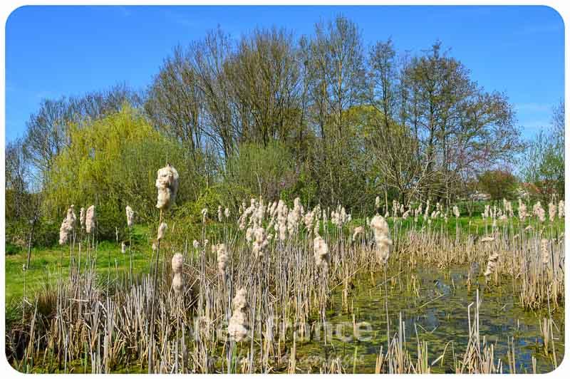 Watermolen, Vauconcourt-Nervezain, Haute-Saone